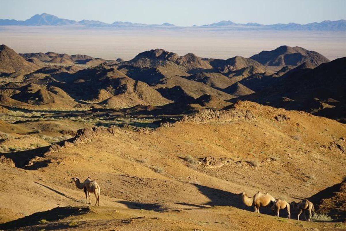 Faszination Mongolei – Weite, Wüste, Wildnis